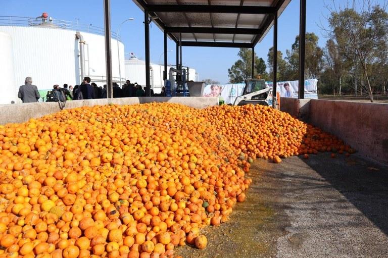 reutilización de naranjas.jpeg