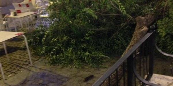 Actuación en cuatro árboles del Pumarejo por motivos de seguridad