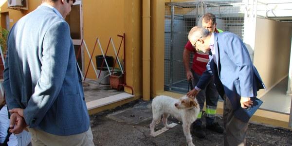 Campaña para impulsar las adopciones de perros y gatos del Zoosanitario