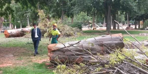 El Ayuntamiento avanza en el plan especial de saneamiento del arbolado del Parque de María Luisa con actuaciones de poda y mantenimiento en los ejemplares que presentan mayor riesgo