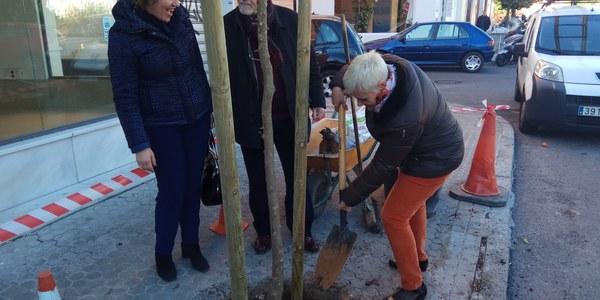 El Ayuntamiento comienza a plantar 100 árboles en Nervión dentro de su plan de replantación de más de 1.000 ejemplares en alcorques vacíos de toda la ciudad