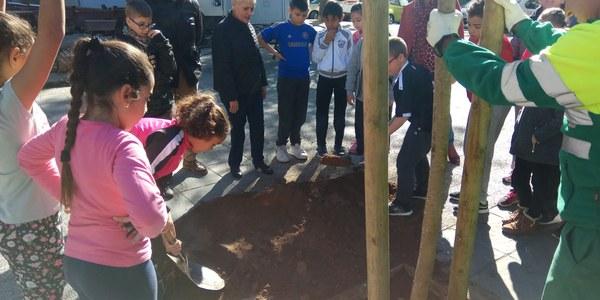 El Ayuntamiento planta 105 nuevos árboles en el Distrito San Pablo-Santa Justa dentro de su plan de replantación de más de 1.000 ejemplares en alcorques vacíos de toda la ciudad