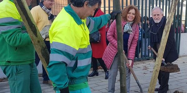 El Ayuntamiento continúa con la campaña de plantación de árboles en alcorques vacíos de toda la ciudad con 400 nuevos ejemplares en Este-  Alcosa-Torreblanca
