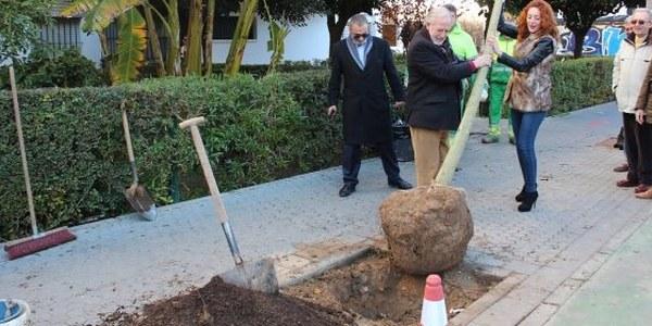 El Ayuntamiento continúa con la campaña de plantación de árboles en alcorques vacíos de toda la ciudad con 41 nuevos ejemplares en el Distrito Macarena