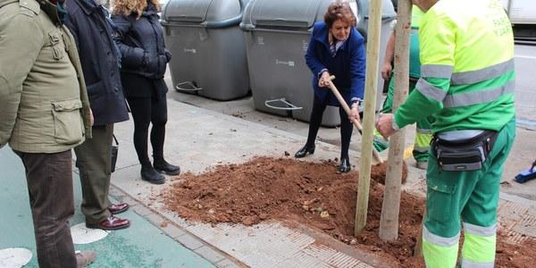 El Ayuntamiento continúa con la campaña de replantación en alcorques vacíos de toda la ciudad con nuevos ejemplares en Los Remedios y prevé árboles en los tramos reurbanizados de las calles Virgen de Regla y Niebla