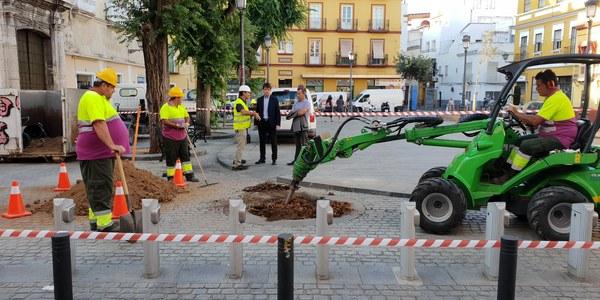 El Ayuntamiento inicia los trabajos previos a la plantación de los nuevos árboles de la Plaza del Pumarejo