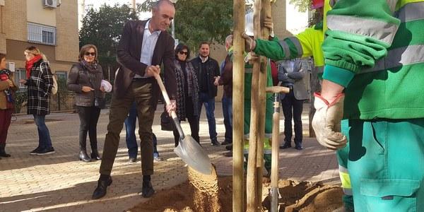 El Ayuntamiento inicia una campaña de plantación de 1.000 árboles en alcorques vacíos y parques de toda la ciudad