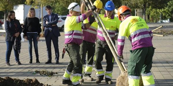 El Ayuntamiento planta 21 almeces en Tres Barrios dentro de la campaña de plantación de 5.100 árboles y 4.500 arbustos