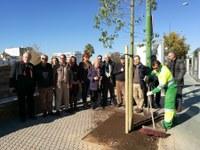 El Ayuntamiento planta 22 árboles en el Paseo de las Delicias dentro de la campaña de actuación en 1.000 alcorques vacíos