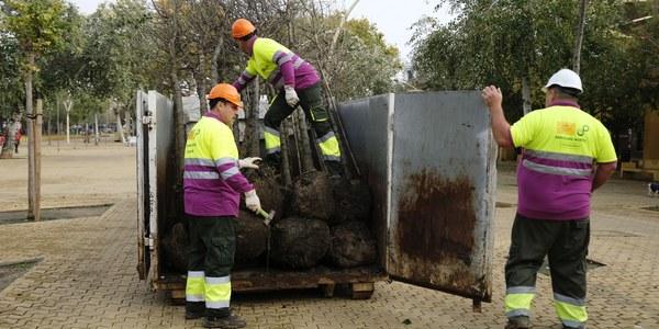El Ayuntamiento planta 24 árboles en la Alameda de Hércules dentro de la campaña de 5.100 nuevos ejemplares y 4.500 arbustos para Sevilla