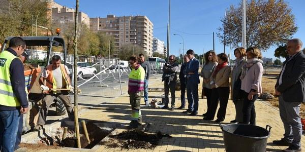 El Ayuntamiento planta 40 árboles de sombra en la Avenida Flota de Indias