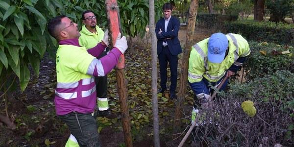 El Ayuntamiento planta 44 árboles en los Jardines del Valle dentro de la campaña de 5.100 nuevos ejemplares y 4.500 arbustos para Sevillas