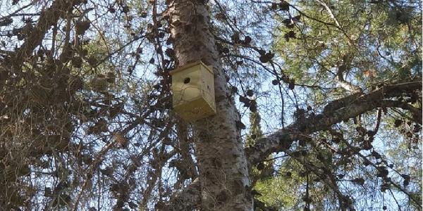 El Ayuntamiento pone en marcha un sistema de control biológico de roedores con cajas nido para acrecentar la población de rapaces nocturnas