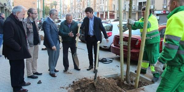 El Ayuntamiento prosigue con  la campaña de replantación en alcorques vacíos de la ciudad con un centenar de nuevos ejemplares en el Distrito Cerro-Amate