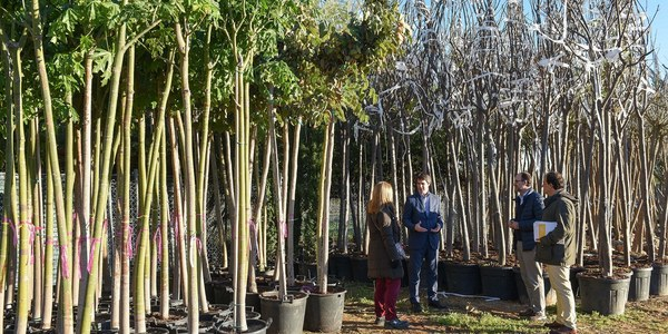 El Ayuntamiento recibe  un nuevo suministro de 2.200 árboles en los viveros municipales para la actual campaña de plantaciones