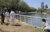 El Jardín Americano reabre hoy  tras la recuperación de su lago y cascadas y la ejecución de podas y desbroces y con un adecentamiento generalizado y más papeleras