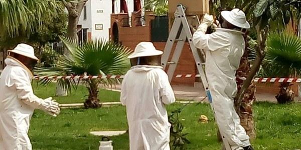 El Zoosanitario Municipal pone  un marcha un plan especial con recursos propios para reforzar  los trabajos de control de  avispas y abejas en la ciudad
