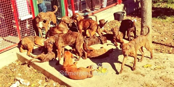 La Policía Local investiga y busca al autor del abandono de 18 perros de razas potencialmente peligrosas en el interior de un parque infantil