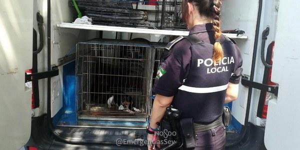 La Policía Local y el Zoosanitario intervienen 5 perros en una vivienda tras quejas vecinales por sus condiciones higiénico-sanitarias y pasarán al programa de adopción
