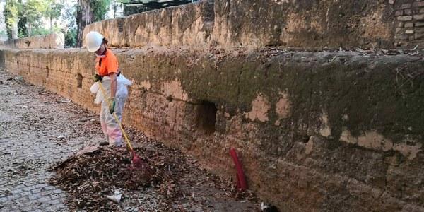 Limpieza y desbroces en los alrededores de la Muralla de la Macarena y en el propio monumento