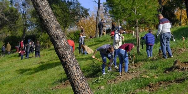El Muro de Defensa contará con 500 nuevos árboles de pequeño porte y 500 arbustos gracias a la plantación forestal realizada por la plantilla de la empresa GRI en colaboración con el Ayuntamiento