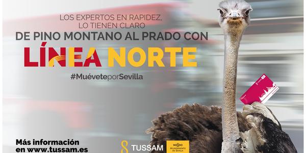 El lunes se pone en marcha la nueva línea Norte que unirá de forma directa Pino Montano con Santa Justa, Nervión, San Bernardo y el Prado