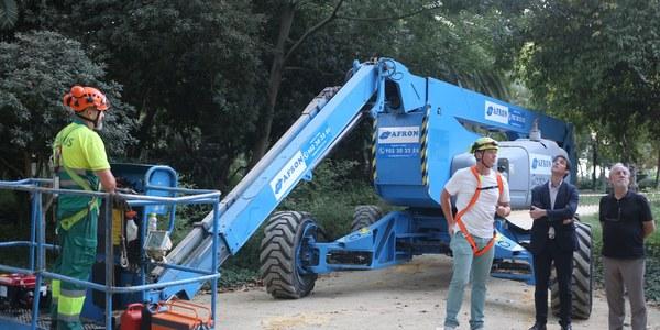 Plan de protección del nóctulo gigante durante las tareas de conservación de la arboleda del Parque de María Luisa