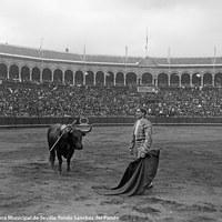 13- Joselito mira al tendido tras entrar a matar a su enemigo en la Real Maestranza de Sevilla. 1914
