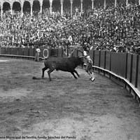 3- Joselito durante la ejecución de clavar un par de banderillas de dentro a fuera en la Real Maestranza de Sevilla.1918