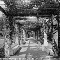 7. Pérgolas laterales del Estanque de los Leones. 1910-1920 ca. ©ICAS-SAHP, Fototeca Municipal de Sevilla, fondo Serrano