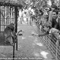 17. Zoológico del Parque inaugurado en 1967 ©ICAS-SAHP, Fototeca Municipal de Sevilla, fondo Cubiles