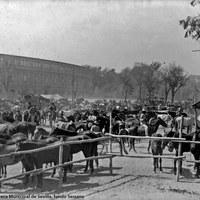 Feria de 1922. Vista de las cercas del ganado equino en el Prado de San Sebastián. En segundo plano, la fachada trasera de la Plaza de España en construcción.