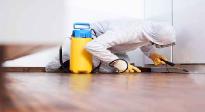 Control y gestión de plagas