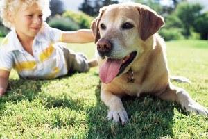 perros-niños.jpg.jpg