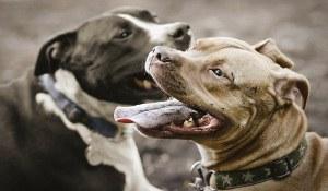 Perros Potencialmente Peligrosos.jpg