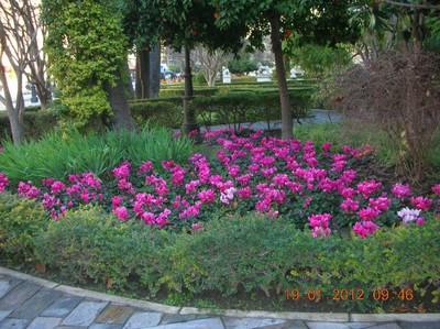 Servicio de Parques y Jardines
